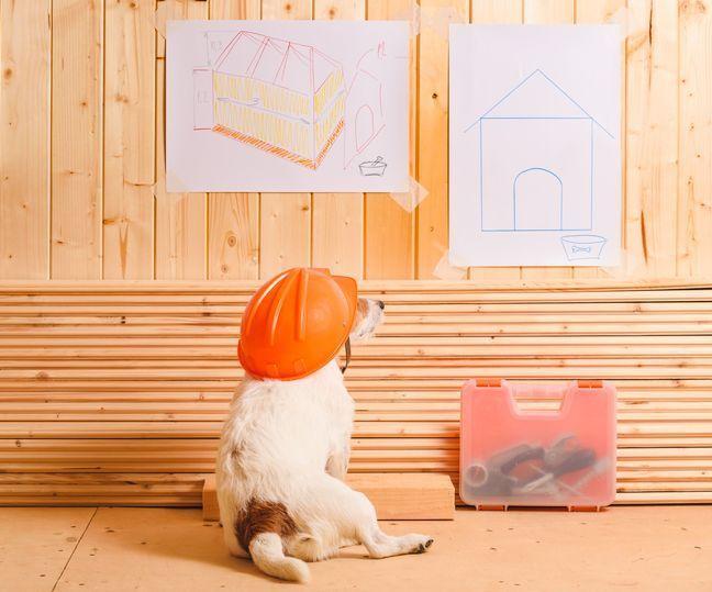 マンションで犬を飼うために必要なリフォームは?